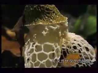Как растут грибы.